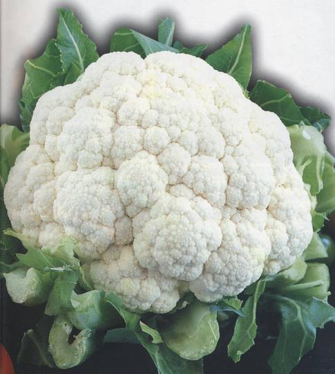 Organic Cauliflower Snowball