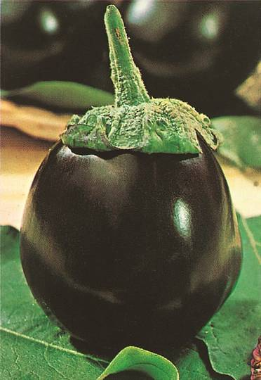 Organic Eggplant Black Beauty