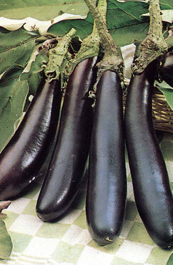 Organic Eggplant Long Purple
