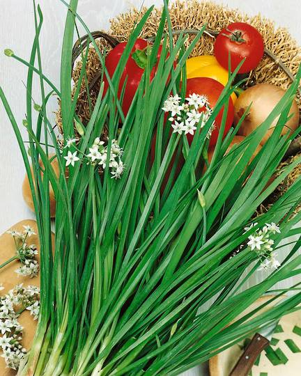 Organic Garlic Chives