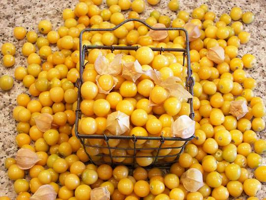 Organic Ground Cherry