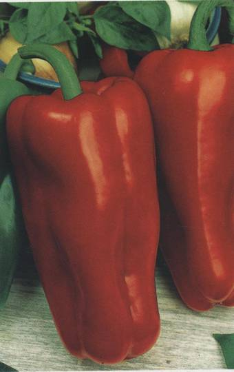 Organic Pepper Marconi Red