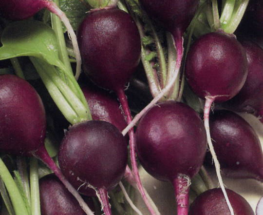 Organic Radish Purple Plum