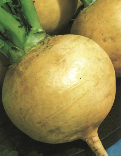 Organic Turnip Golden Ball