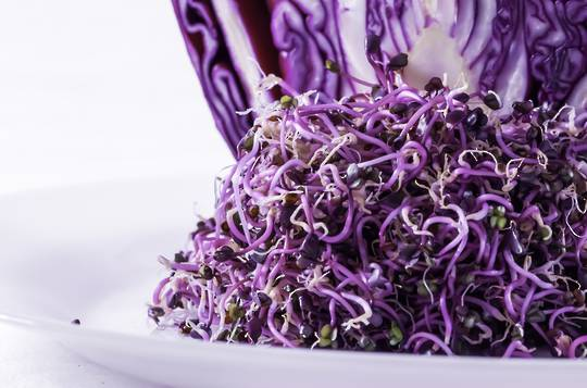Organic Red Cabbage Bulk