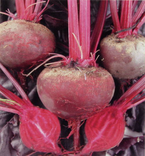 Beetroot Bulls Blood