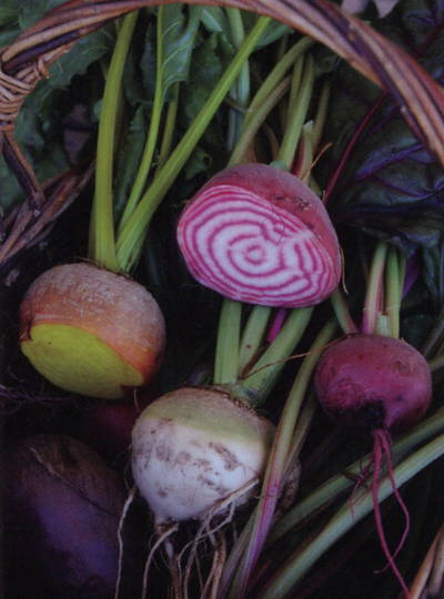 Beetroot Colour Blend