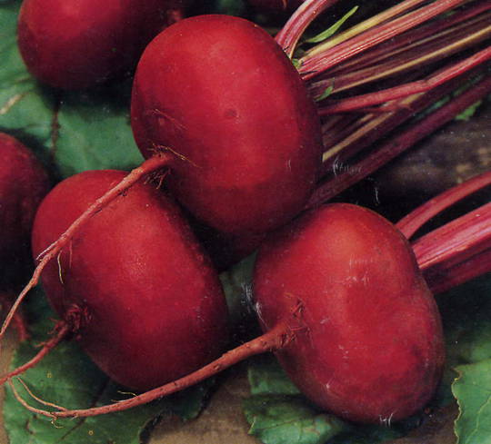 Beetroot Crosbys Egyptian Flat