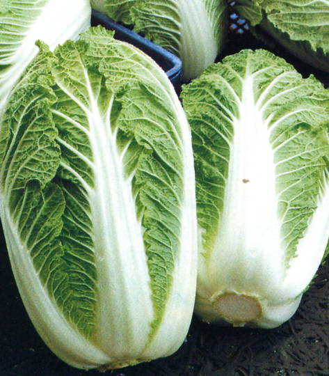 Cabbage Chinese One Kilo Slowbolt F1