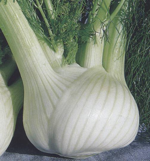 Florence Fennel Finale