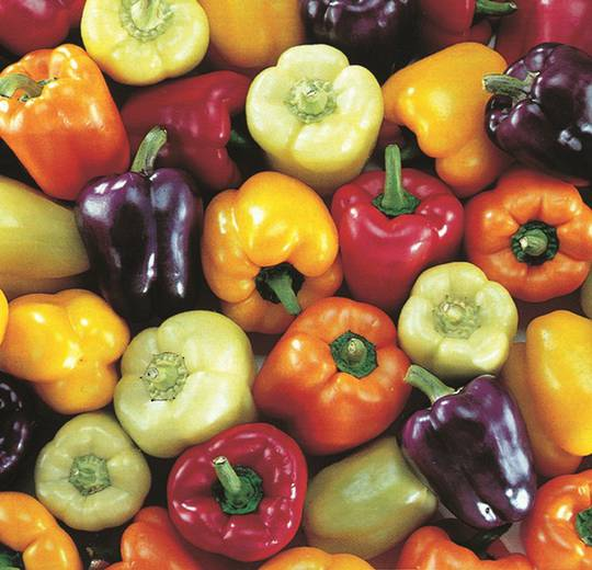 Pepper Bell Colour mix