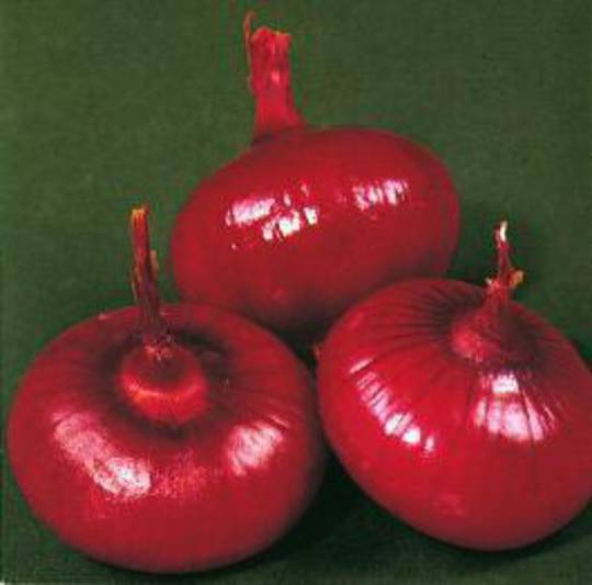 Onion Red Brunswick