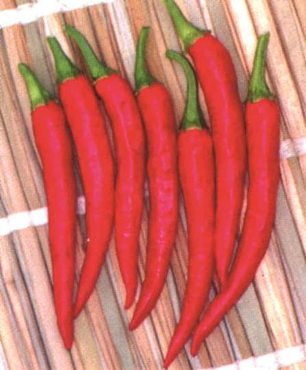 Chilli Asian Fire F1