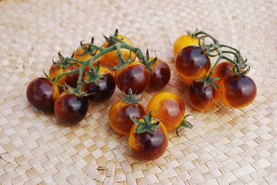 Tomato Indigo Gold Berries