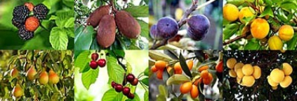 assorted-fruit-trees-663
