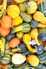 Gourds Large Fruited Mixed